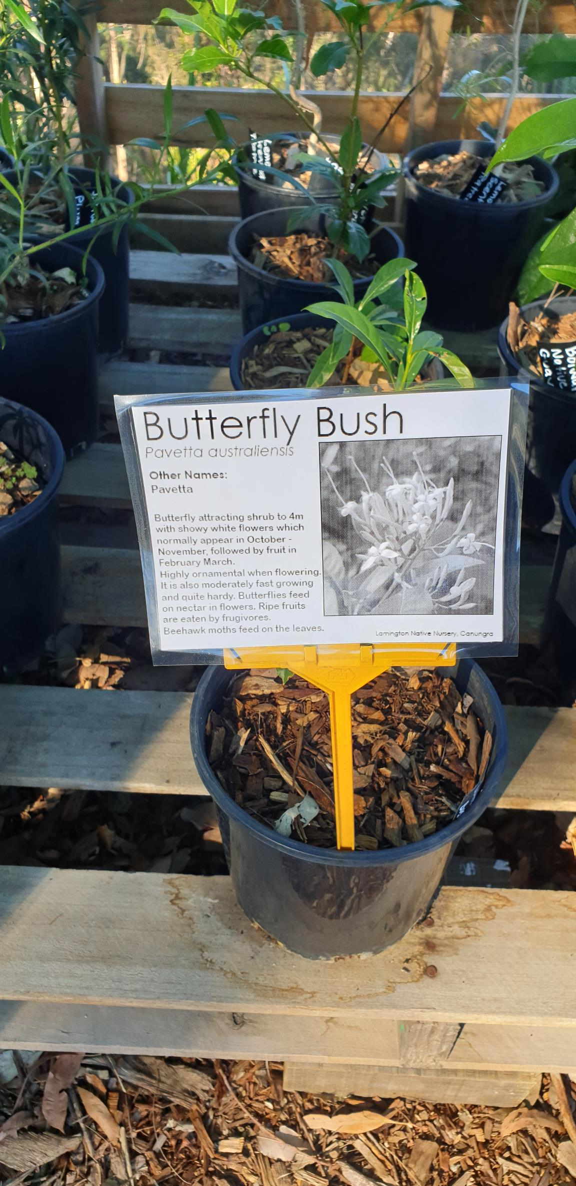 New Plant Labels - Butterfly Bush