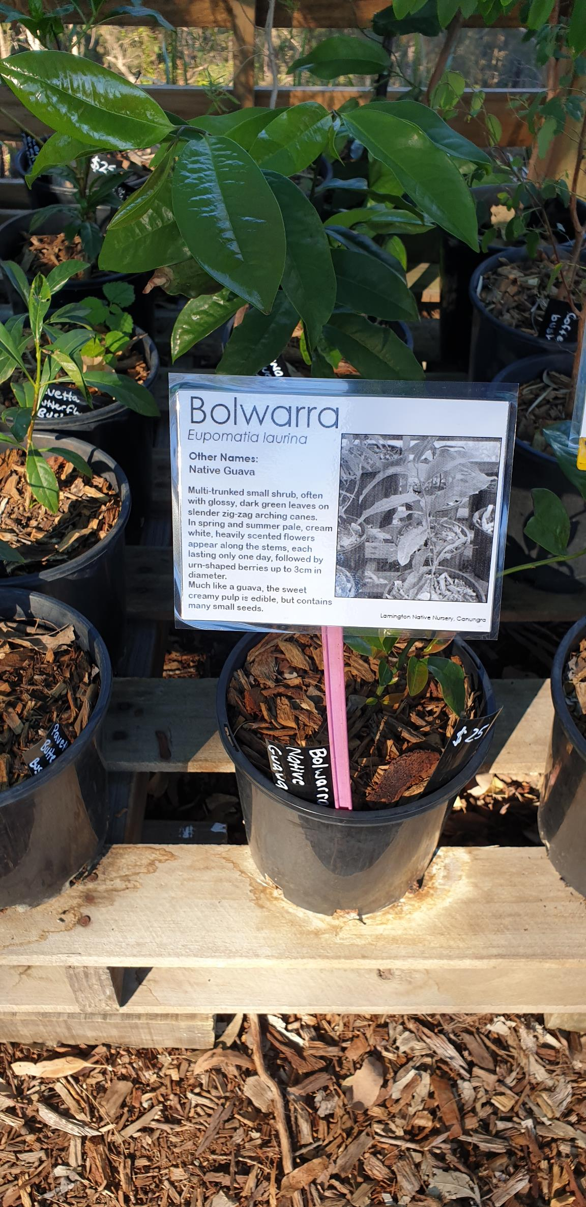 Bolwarra/Native Guava - Label