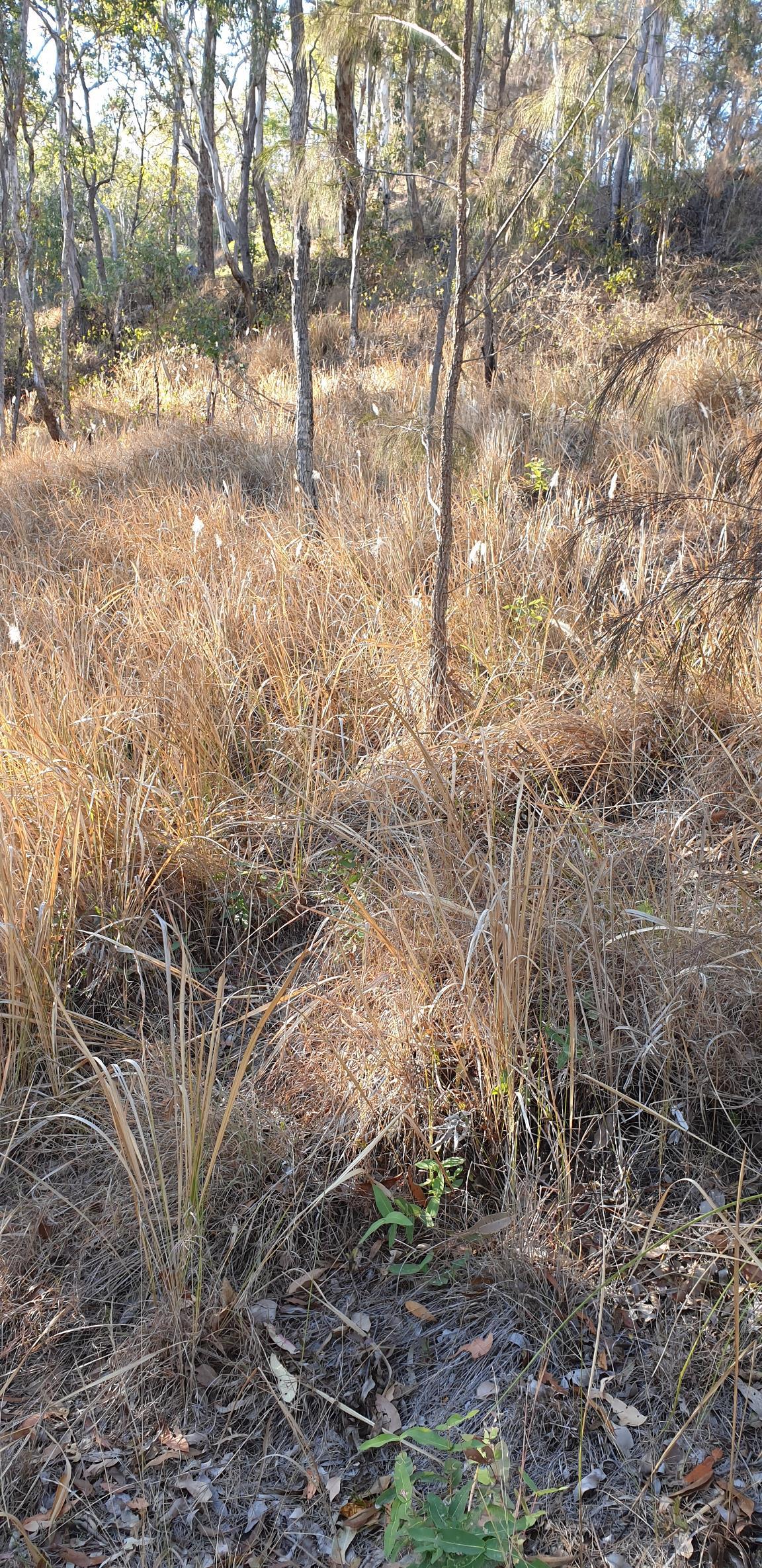 Grassland Forest