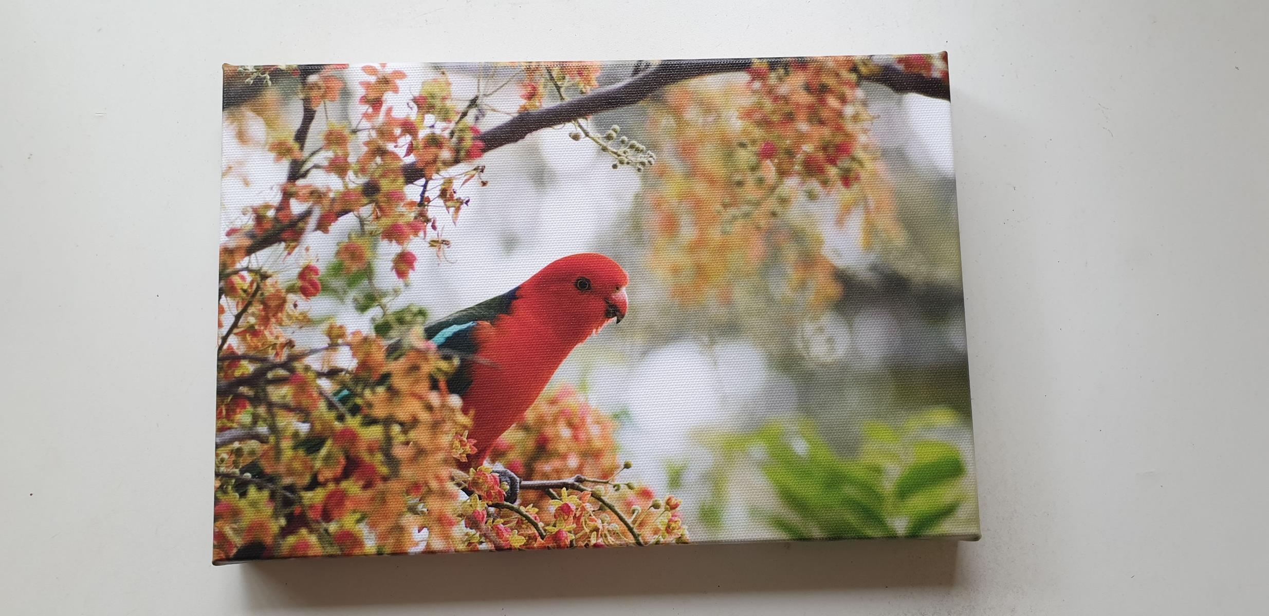 King Parrot - Canvas