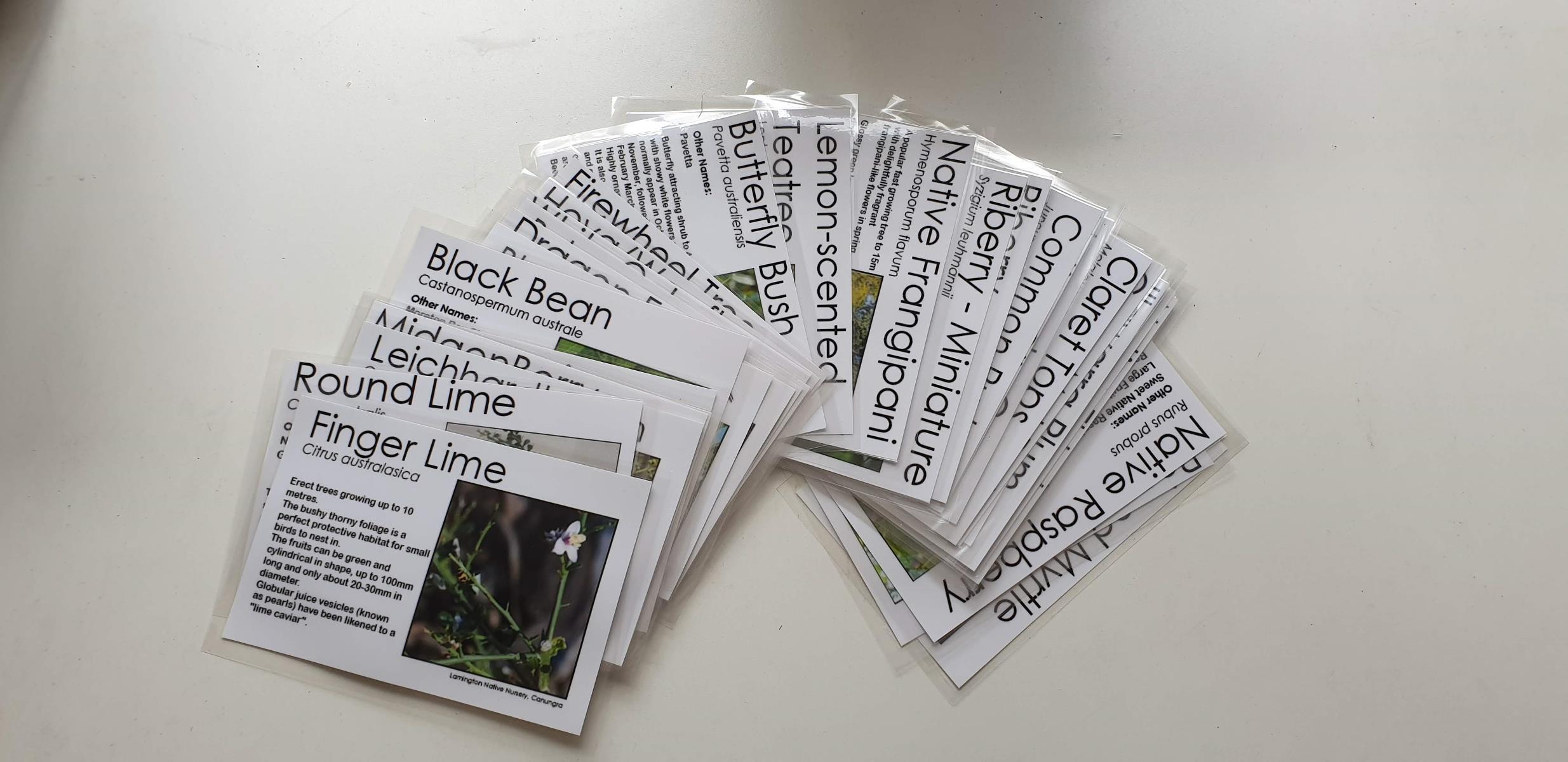 Colour Plant Labels