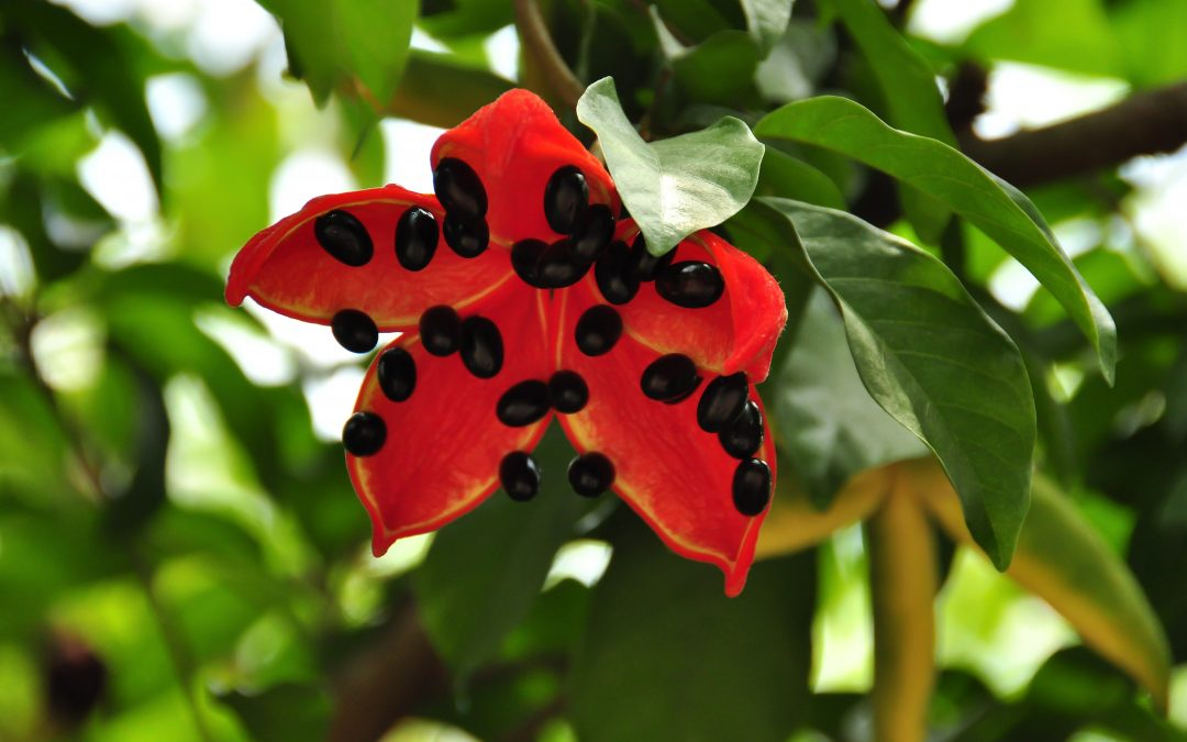 Plant of the Month – November 2019