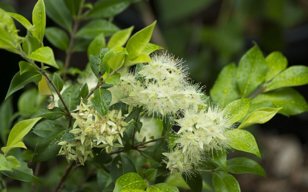 Plant of the Month – December 2019